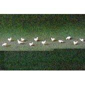 CHICKENS 1:48 WHITE 24PC