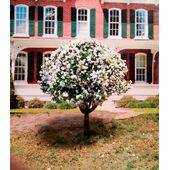"TREE-PREMADE 2"" flowering-almond 4pc"