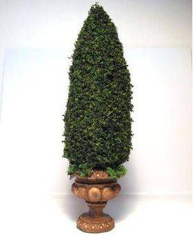 TOPIARY-6' ROUND.BASE TOP-12H