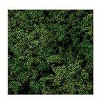 FOLIAGE EVERGREEN 20G