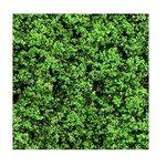 FOLIAGE FOREST GREEN 25G