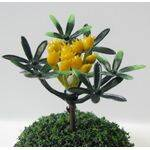 "TROPICAL PLANTS 1.5""TALL 5PC"
