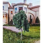 TREE-PREMADE 5.5'' EASTERN GREEN 2PC