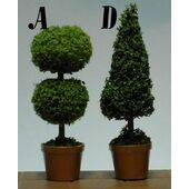 TOPIARIES 1:24 CEDAR 'D' 1PC