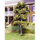 TREE-PREMADE 8'' BIRCH-WEEPING 2PC
