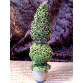 "TOPIARY- 5""tall  1"" round pot"