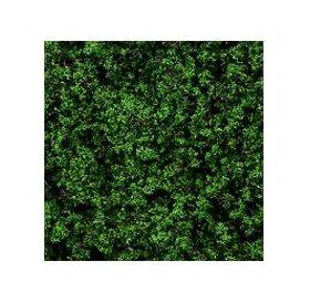 FOLIAGE EVERGREEN 25G