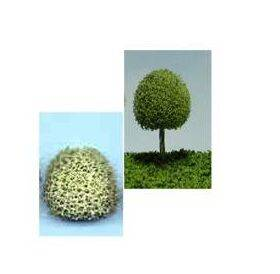 TREE-DECIDUOUS 'B' 1/2'' 10PC