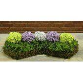 GARDEN DELIGHTS W/BED Yellow-Violet-White Small