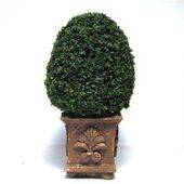 TOPIARY-4.5' SQUARE BASE TOP-12E